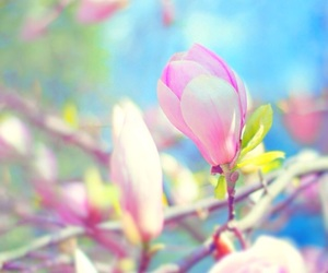 beauty, cherry blossom, and spring image