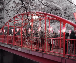 pink, sakura, and love image
