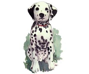 dalmatian, dog, and illustration image