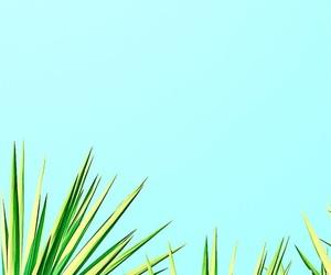 summer, yolo, and sun image