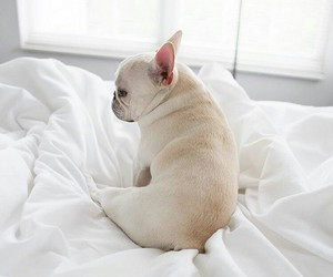 animals, baby, and bed image