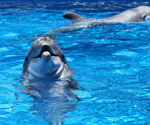 dolphin, cute, and photography image