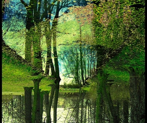 amazing, green, and nature image