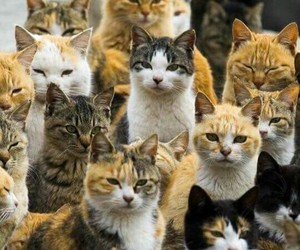 animals, cats, and group of cats image