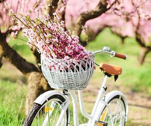 blossom, cherry blossom, and bicycle image