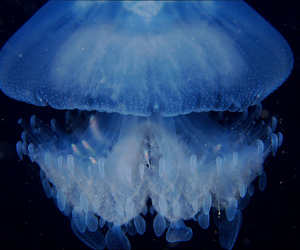art, jellyfish, and beautiful image