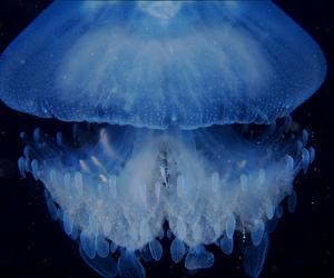 art, beautiful, and underwater image