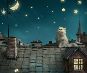 cat, stars, and digital art image