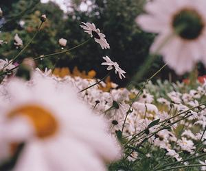 love, flowers, and stupid image