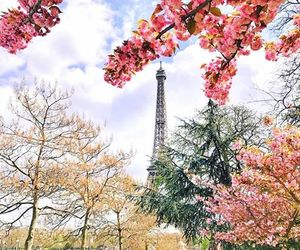 blossoms, flowers, and travel image