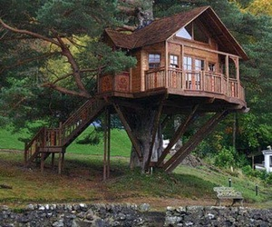 tree house, treehouse, and forest image