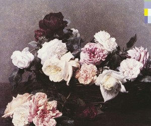 new order, flowers, and rose image