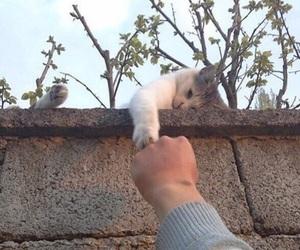 cat, animal, and grunge image