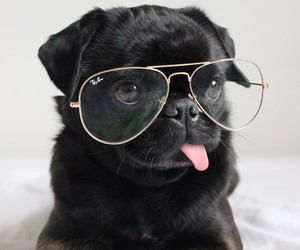 dog, glasses, and pug image