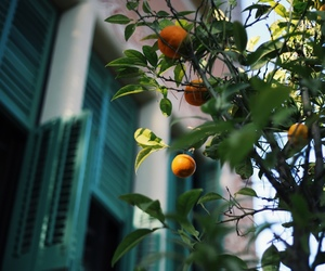 photography, travel, and lemon tree image
