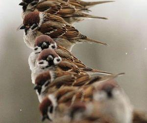 bird, animal, and sparrow image