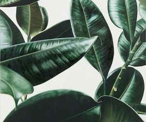 background, leaves, and white image