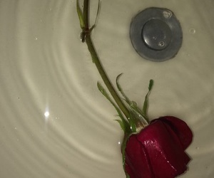roses, sad, and tumblr image