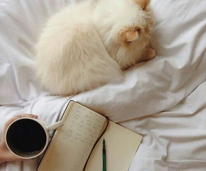 cat, coffee, and book image