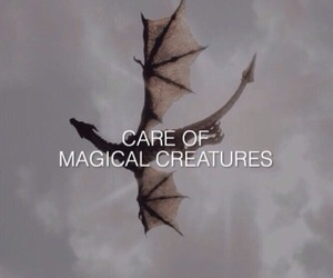 harry potter, creatures, and hogwarts image