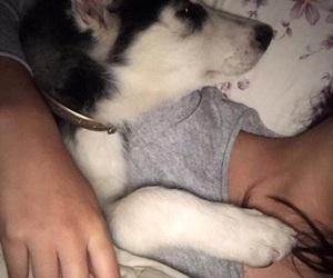husky, child, and cuddle image
