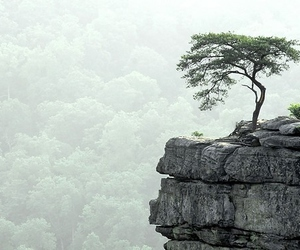 tree, nature, and rock image