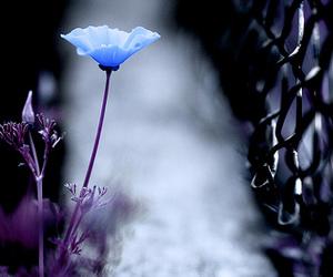 blue, purple, and f1.4 image