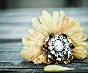 broach, flower, and nature image