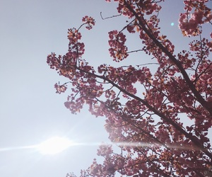 aesthetic, blossom, and spring image