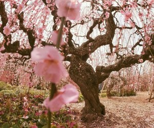 nature, pink, and flowers image