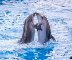 dolphins and sealife image