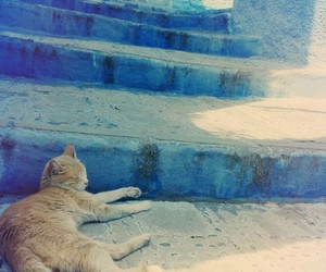 beauty, calm, and cat image