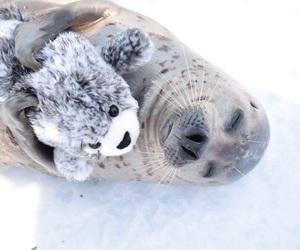 animal, seal, and ice image