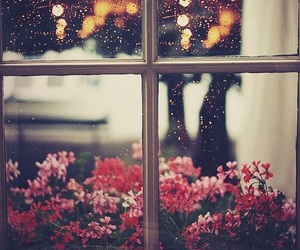 flowers, window, and rain image