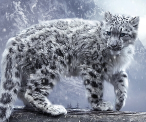 snow, animal, and snow leopard image