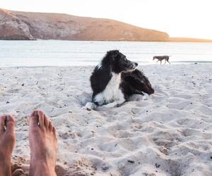 beach, border collie, and ocean image