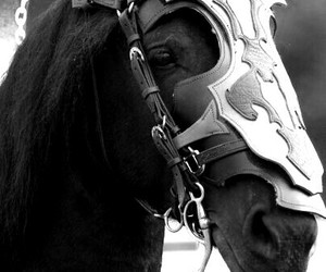 black and white, horse, and nice image