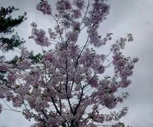 spring and blosom image