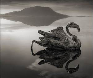 animal, black and white, and scary image