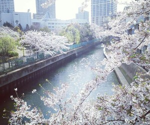aesthetic, beautiful, and japan image