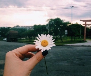flowers, grunge, and hipster image