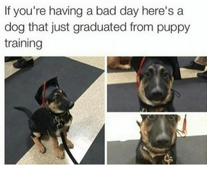 bad day, dog, and funny image