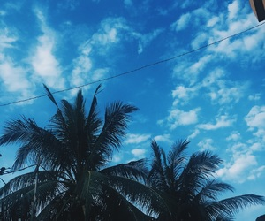nature, coconuttree, and vacation image