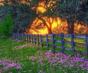 country, flowers, and pink flowers image