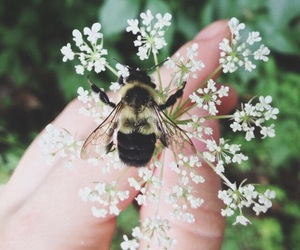 aesthetic, bees, and flowers image