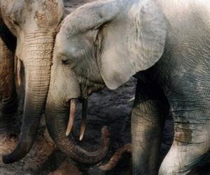 theme, rp, and elephant image