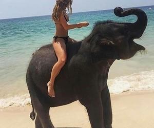 elephant, summer, and beach image