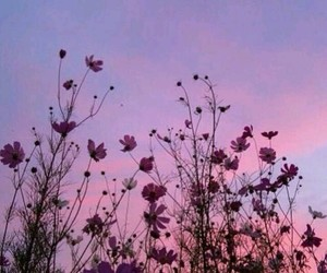 sky, sunset, and flowers image