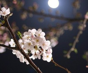 moon, flowers, and night image