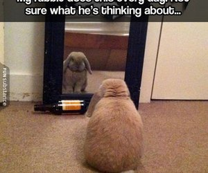 rabbit, cute, and funny image